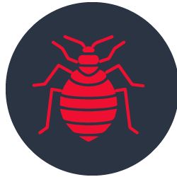 Bed Bugs Control Sorrento