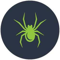 Spiders Control Sorrento