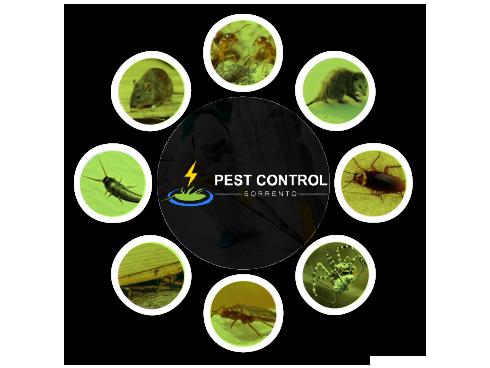 Quality Pest Control Treatment Sorrento
